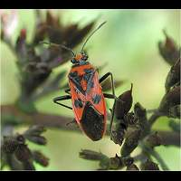 Photograph of a bug